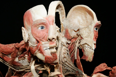 "The BodyWorlds Exhibit. And this is one of the more ""normal"" ones."